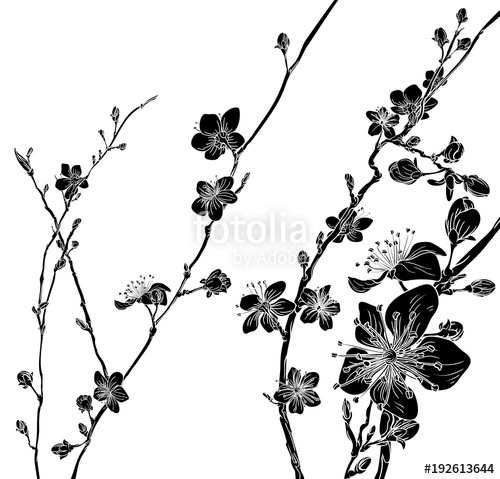 500x479 Peach Cherry Blossom Flowers Background Pattern Stock Image