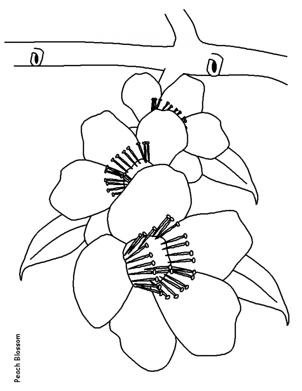 612x792 Coloring Bluebonnet Coloring Page. Flower Coloring Pictures Free