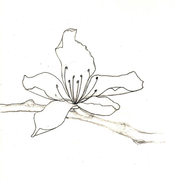 750x760 Sketch Katie Lohman