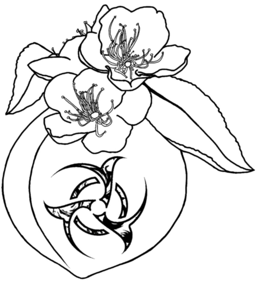 852x937 Bio Peach Blossom By Glaube