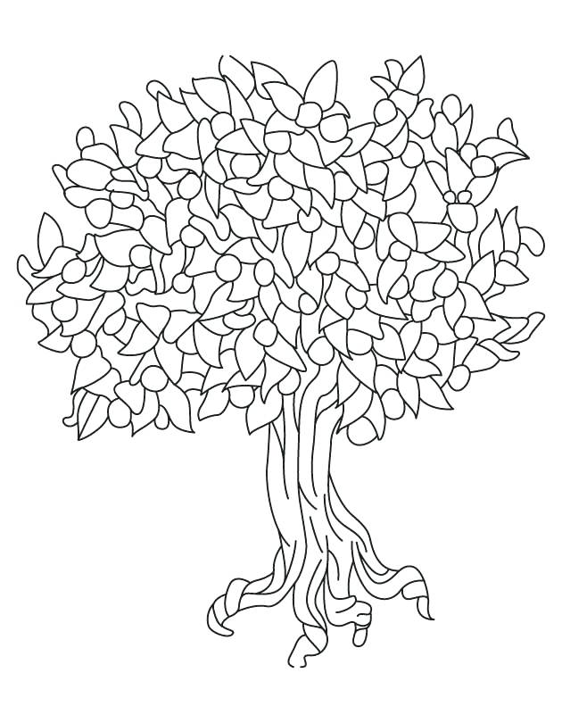 630x810 Tree Coloring Pages For State Tree Fruit Peach Download Free State