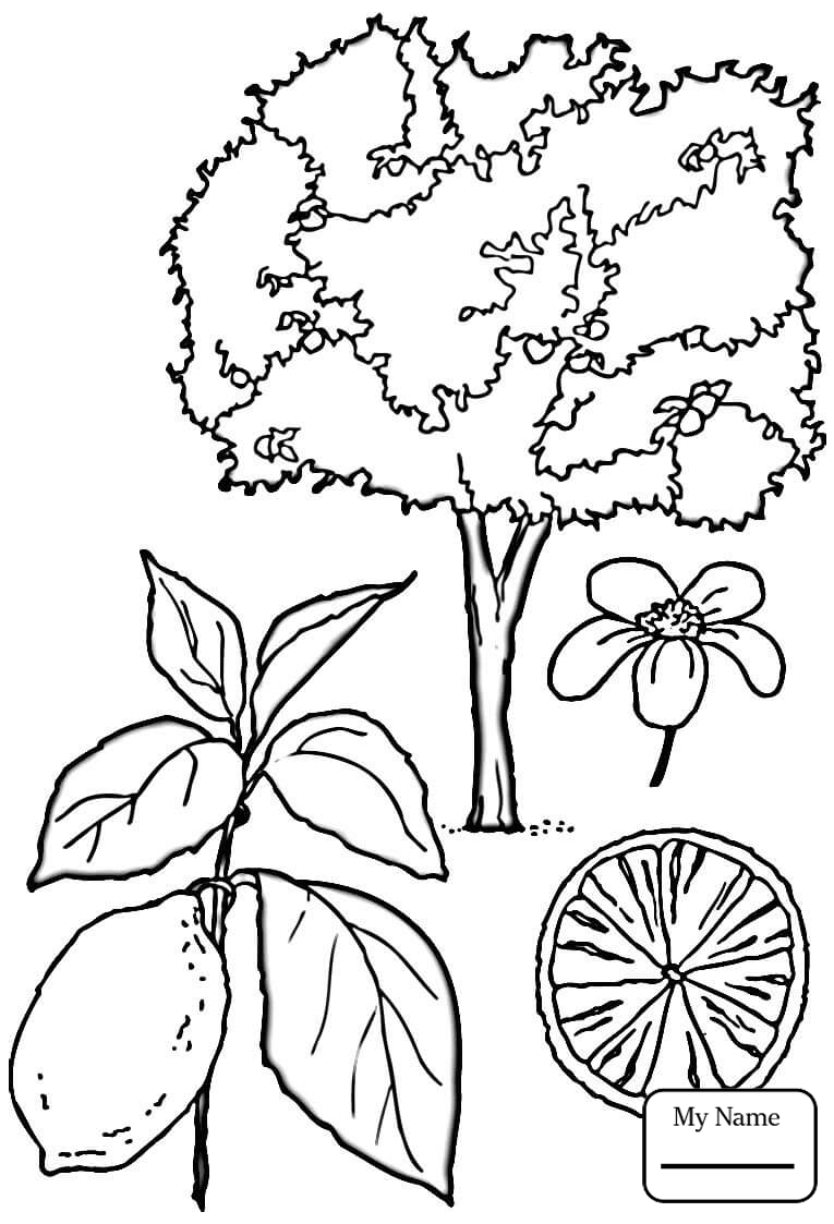 765x1123 Coloring Pages For Kids Peach Blossom Trees Leaves Fruit
