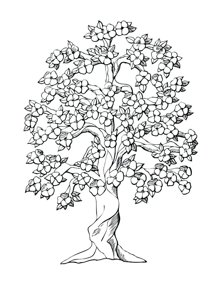Peach Tree Drawing At Getdrawings Com Free For Personal Use Printable Orange Coloring Page
