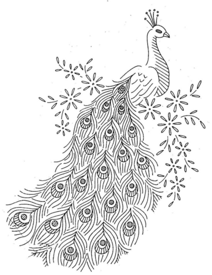 Peacock Black And White Drawing at GetDrawings com | Free for