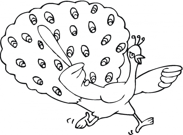 700x515 Bird Peacock Coloring Pages Free Printable Coloring Pages (3