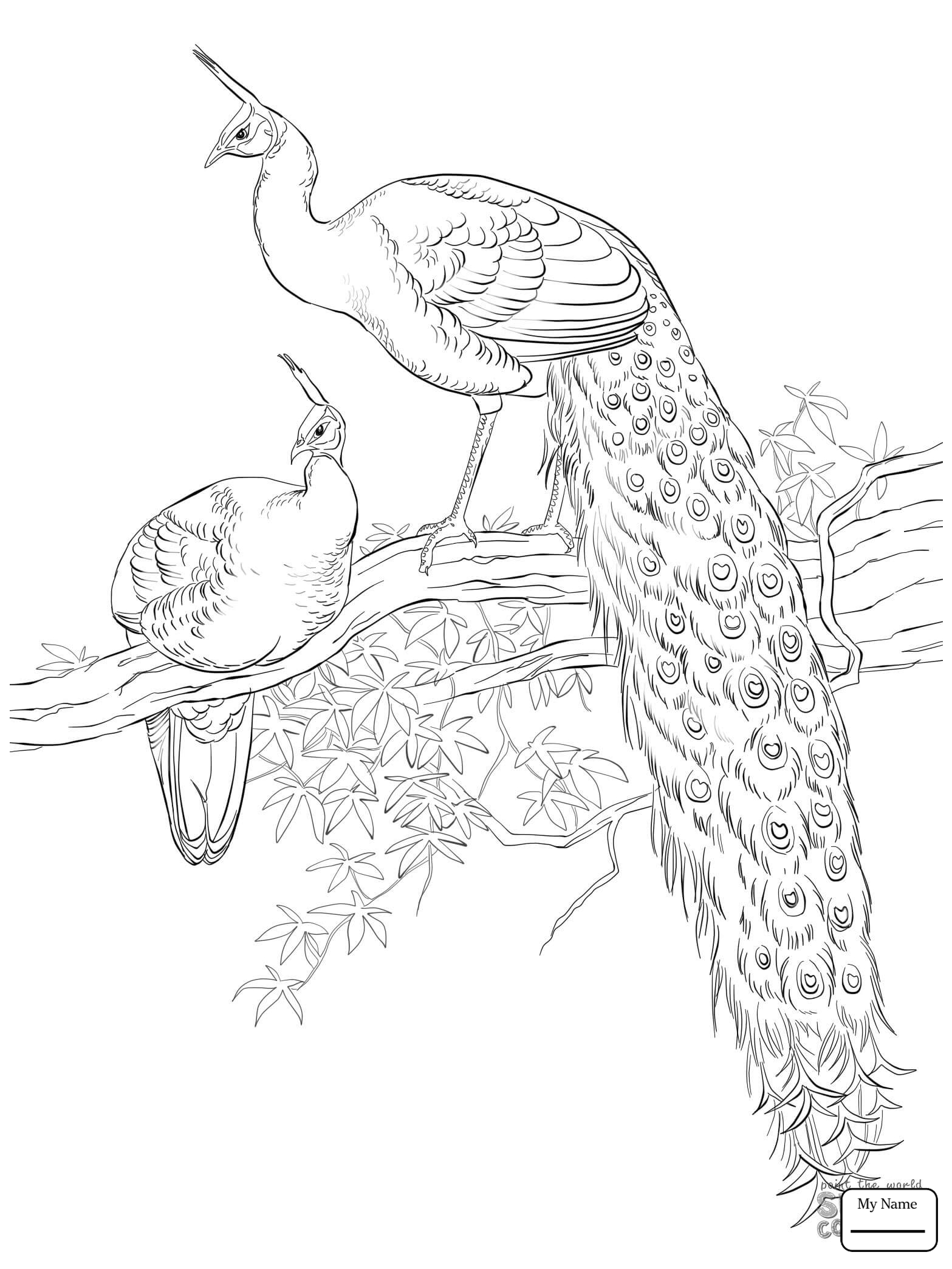 1567x2089 Coloring Pages Peacocks Advanced Peacock Birds