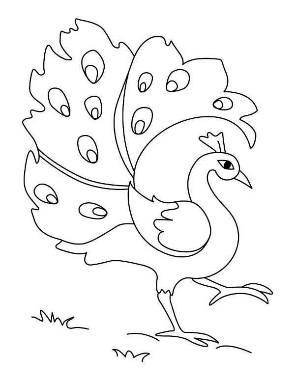 600x776 29 best Sketches images on Pinterest Peacock, Coloring books and