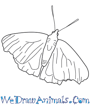 300x350 How to Draw a Peacock Butterfly