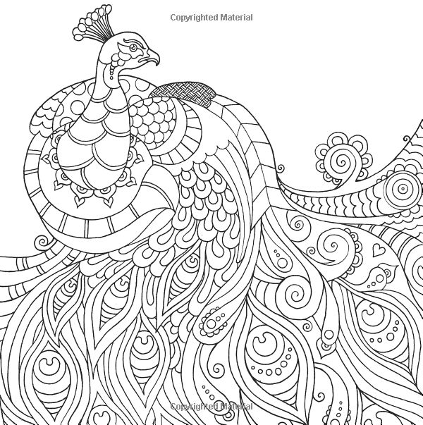 600x603 Peacock Coloring Pages For Big Kids And Adults Printable In Good