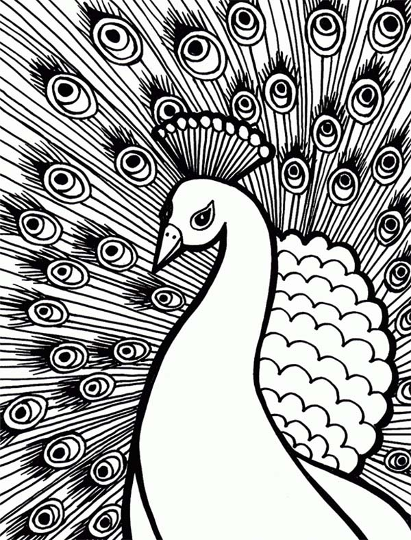 600x788 An Elegant Peacock with Stunning Plumage Feather Coloring Page