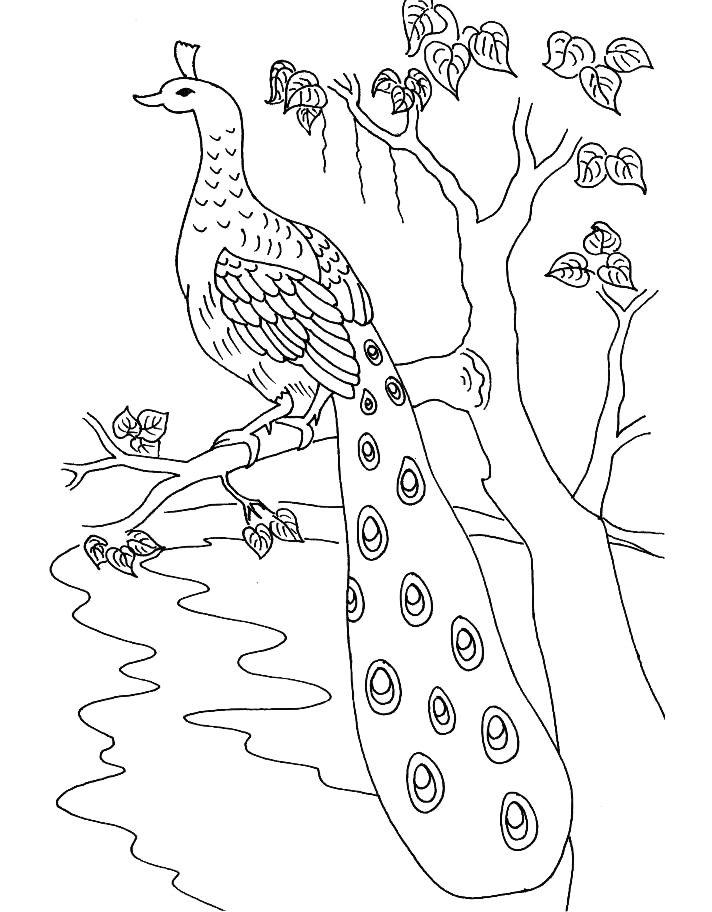 712x912 bird peacock coloring pages free printable coloring pages (10