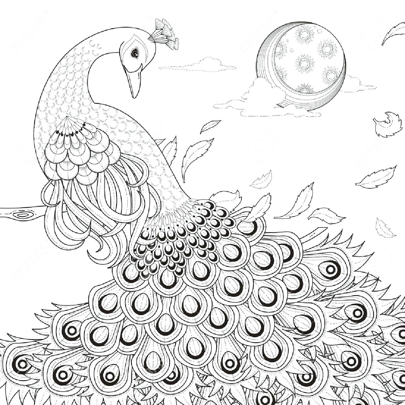 1300x1300 coloring Peacock Coloring Pages Free Of For Drawing Page Advanced