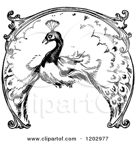 450x470 Cartoon Clipart Of An Outlined Peacock On A Brick Wall