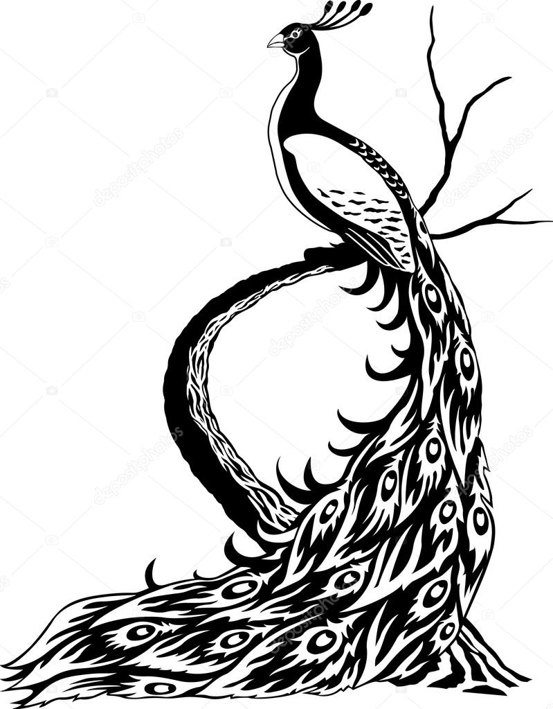 799x1023 Peacock Drawing Black And White