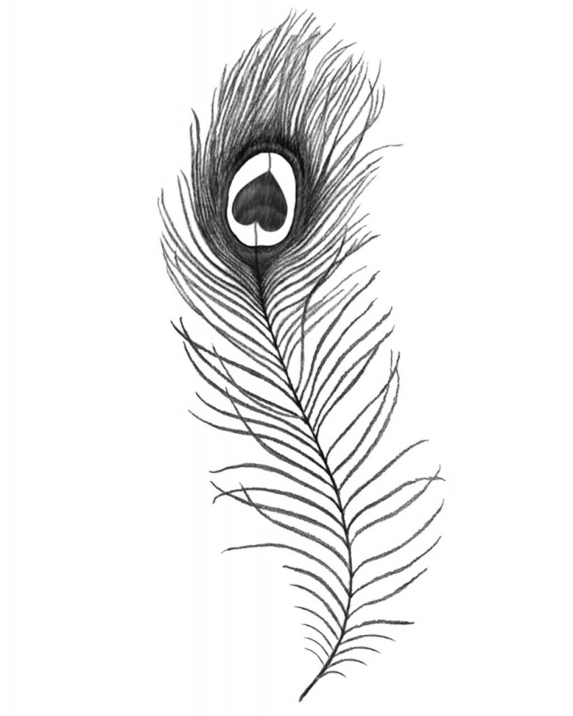 819x1024 Peacock Feather Drawing