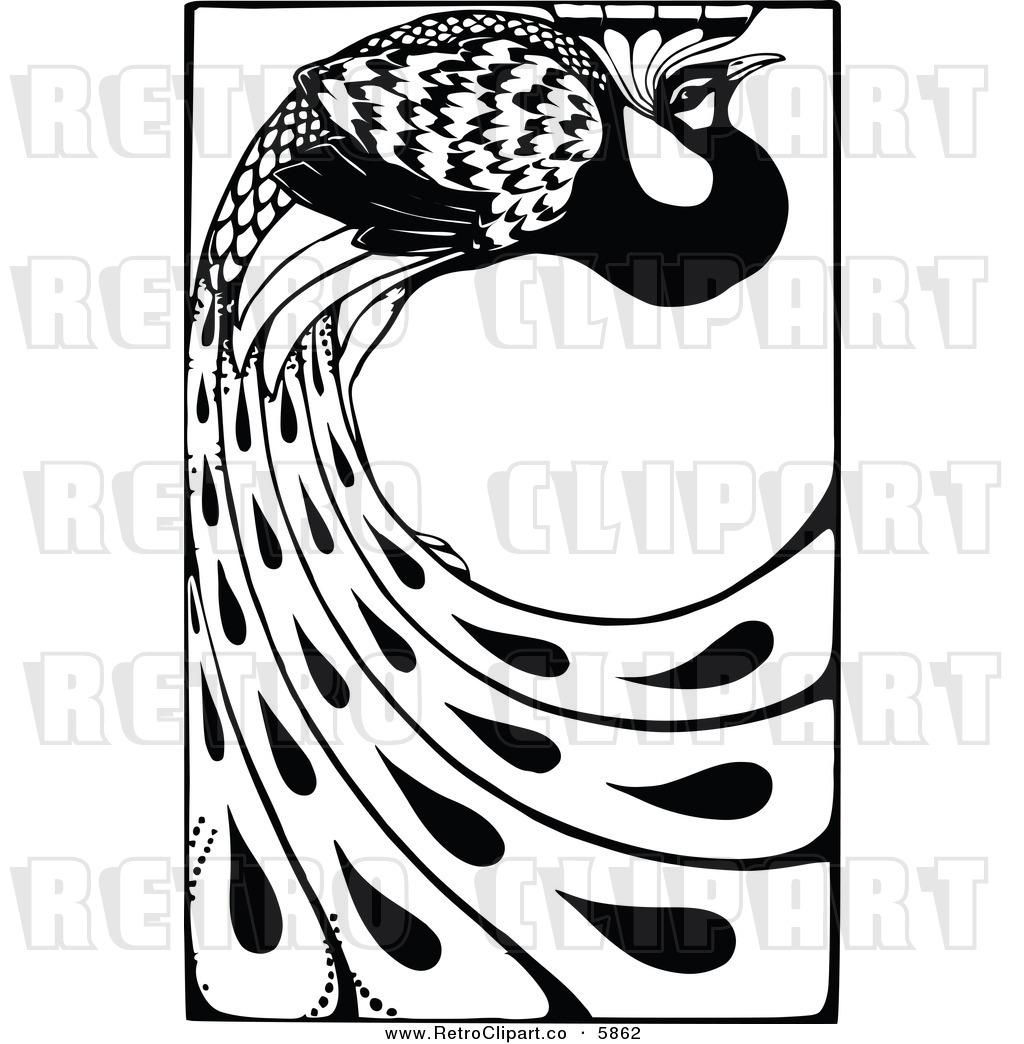 1024x1044 Peacock Vector Clipart