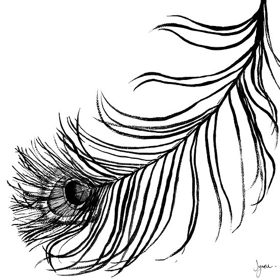 549x550 Peacock Feather Clipart Black And White Free