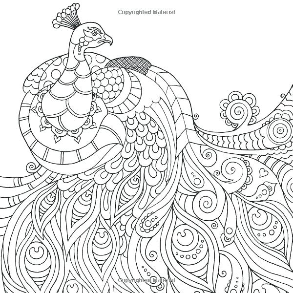 600x600 Peacock Feather Coloring Page Grown Up Colouring Sheets Always Be