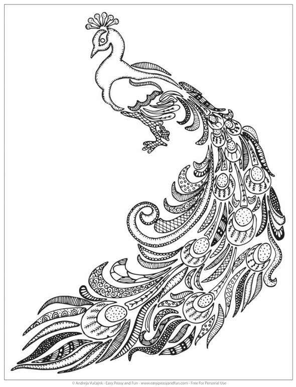 590x772 adult coloring pages peacock printable coloring pages for kids