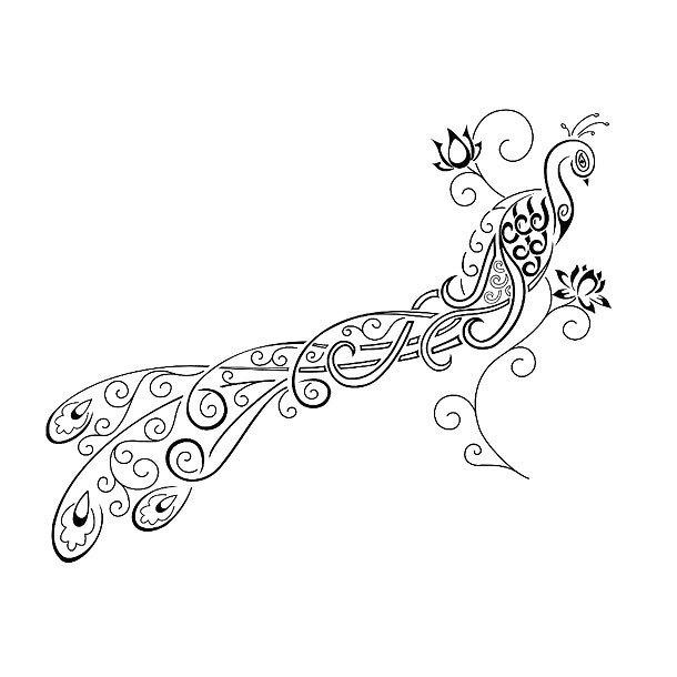 Peacock Drawing Designs