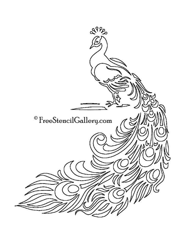 Peacock Drawing Designs at GetDrawings   Free download