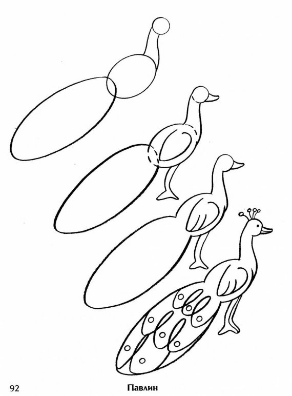 Peacock Drawing Easy at GetDrawings com | Free for personal use