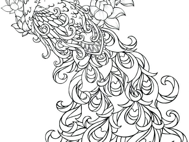 618x464 Download Coloring Pages Peacock Page For Kids Ornate 1 Folk