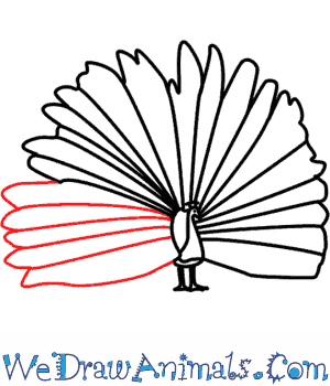 300x350 How To Draw A Peacock