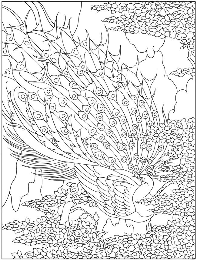 650x861 Peacock Line Drawings