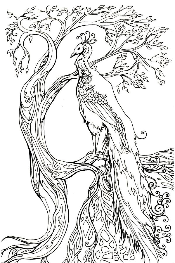 599x900 Peacock And Tree Drawing By Katherine Nutt