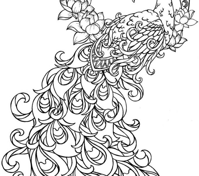 678x600 Amazing Coloring Pages Peacock 79 In Line Drawings With Coloring