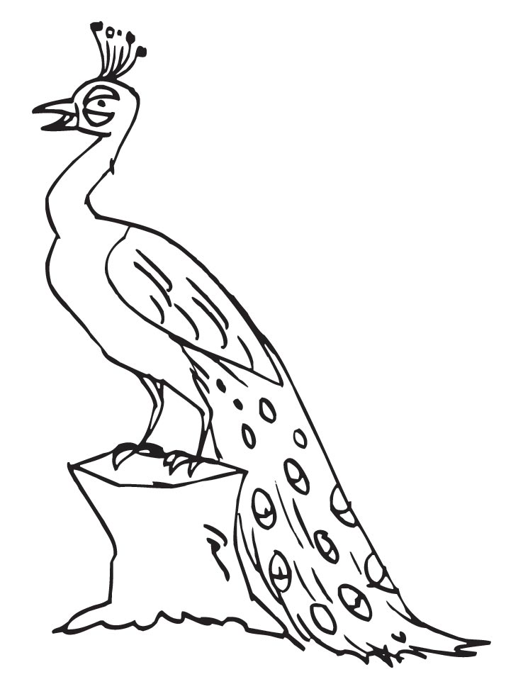 738x972 Peacock Coloring Pages Tail Down For Kids
