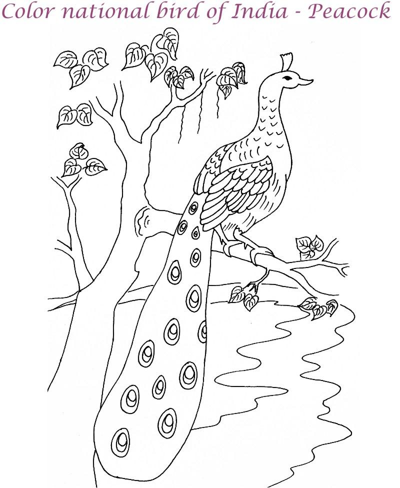 800x976 Peacock Printable Coloring Page For Kids