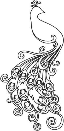 245x500 Super Cool Peacock Outline 244 Best Peacock Line Drawings Images