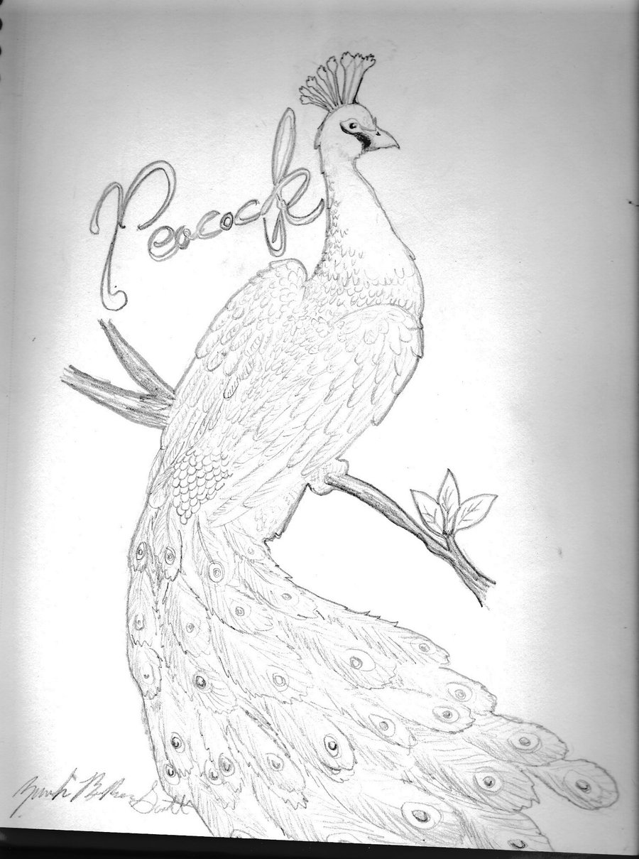 900x1209 Peacock By Pandasrampage