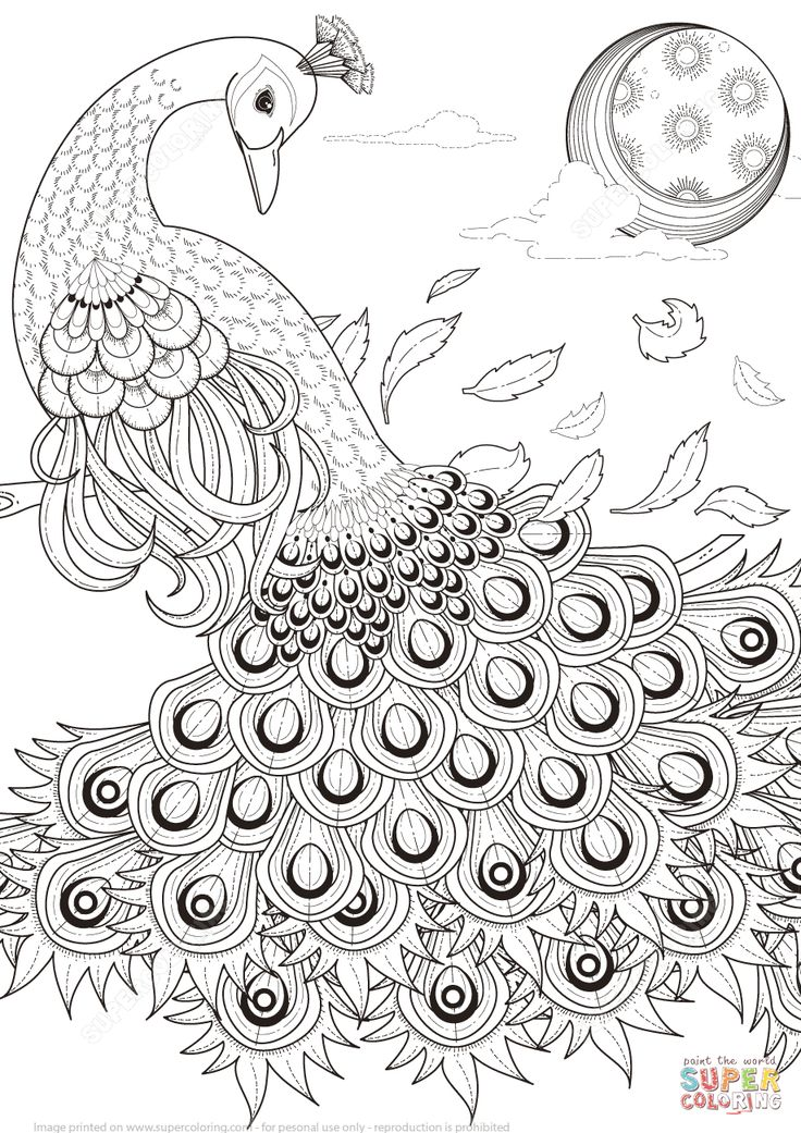 Peacock Drawing Images