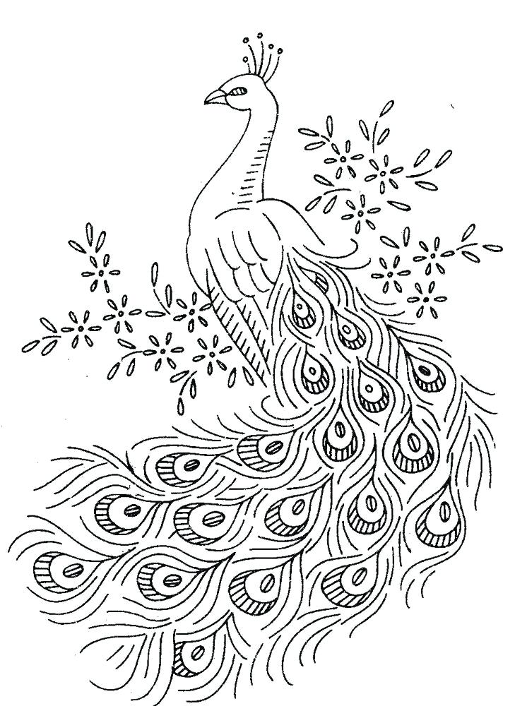 729x1000 Peacock Color Page Vintage Embroidery Transfer Peacocks For Towels
