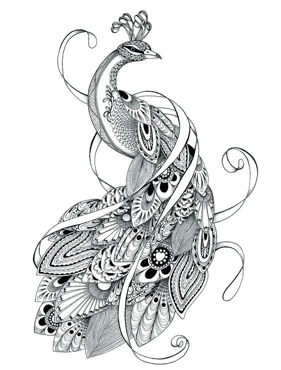 564x742 Classy Coloring Pages Peacock Online Advanced Colouring Page