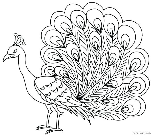 600x524 Advanced Peacock Coloring Pages Colouring Page Pencil And In Color