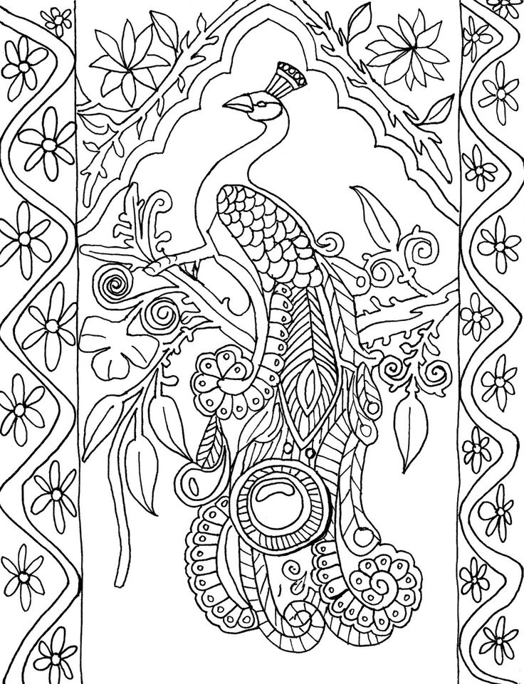 736x961 Peacock Coloring Pages Sheets Colouring In Snazzy