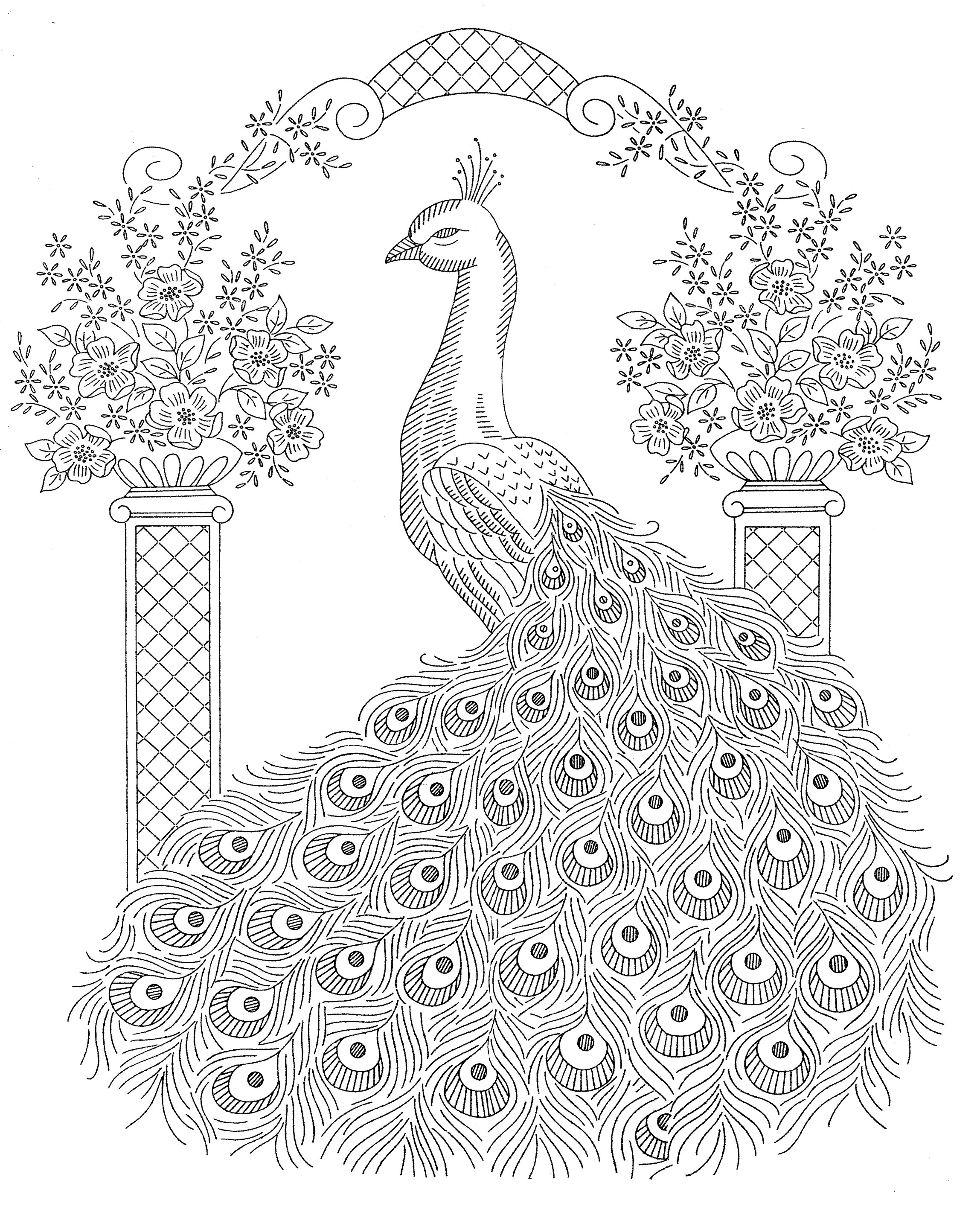 2297x2833 Peacock Drawing Outline