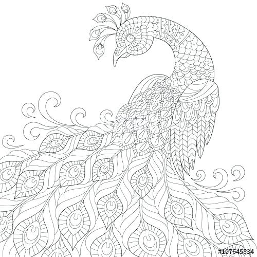 500x500 Peacock Coloring Pages Minimalist Peacock Coloring Pages Kids