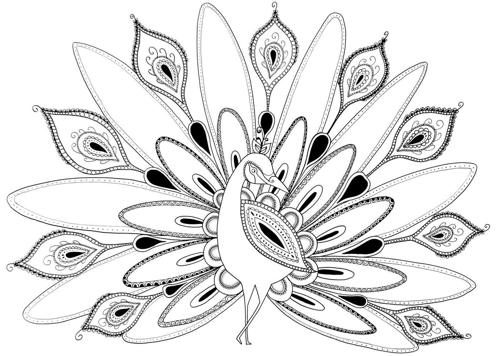 1600x1133 Peacock Coloring Pages