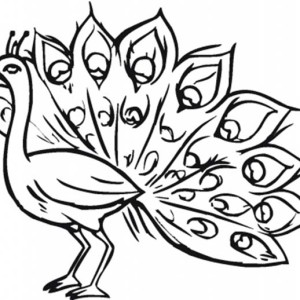 300x300 Peacock Feather Coloring Page Clipart Panda