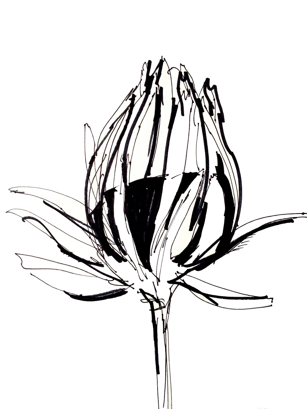1200x1600 Tropical Flower Drawing Sketch Coloring Page View Larger Image