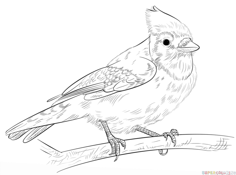 776x575 Simple Blue Jay Coloring Page Toronto Blue Jays Coloring Pages