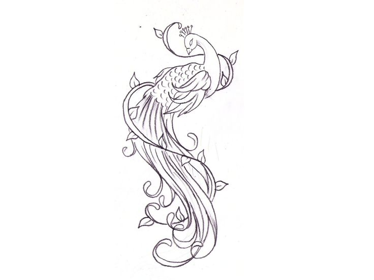736x552 Peacock Design Nice For A Foot Tattoo!! Tattoos And Piercings