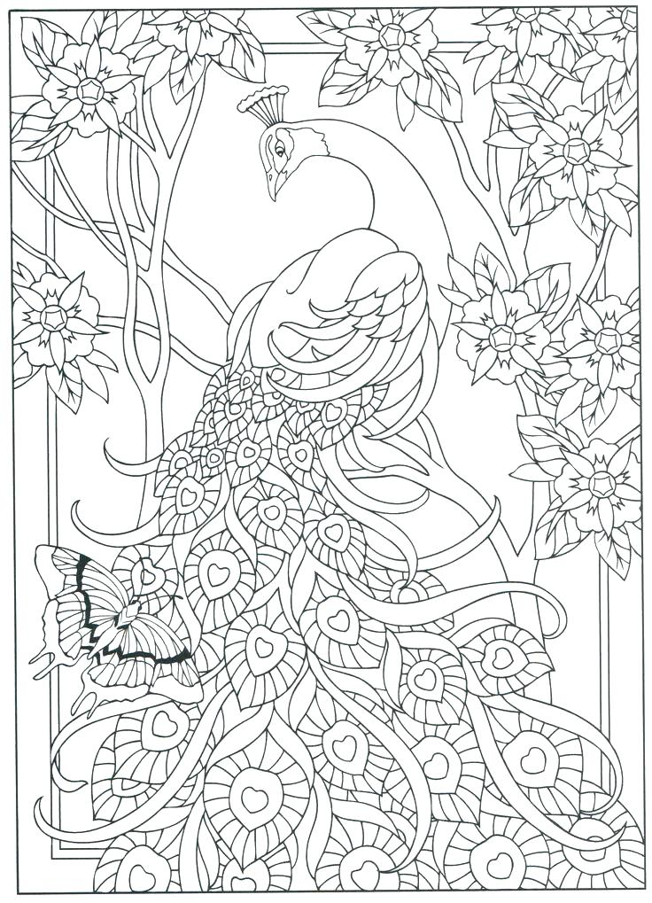 736x1019 Coloring Pages Peacock Peacock Color Page Peacock Coloring Page