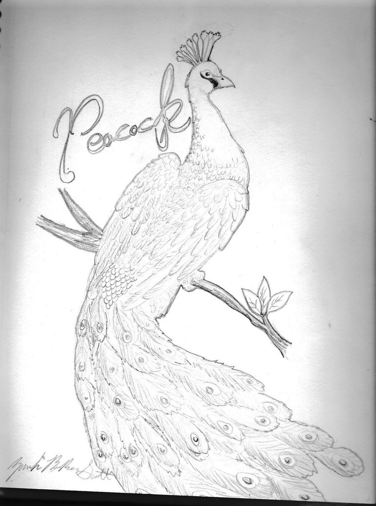 771x1036 Peacock By Pandasrampage
