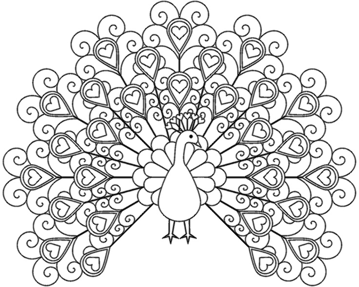 736x588 Beautiful Peacock Coloring Page 51 On Cute Coloring Pages